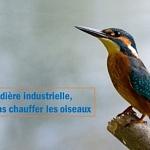 Chaudière industrielle, ne pas chauffer les oiseaux